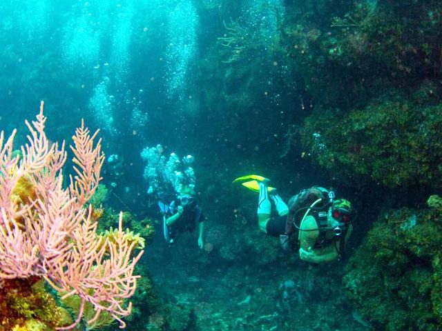 Custom Dive Classes, Courses & Training